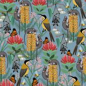 Australian pollinators