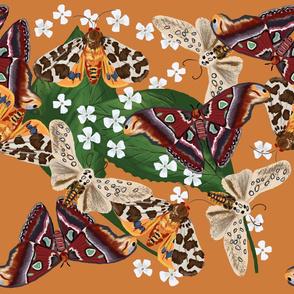 Moth Frenzy 02