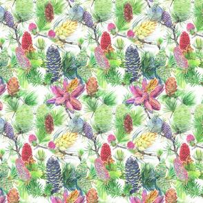 Pine Cones (Small)