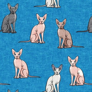 Sphynx Cats - Hairless Cats Sitting -  Multi Blue - LAD19