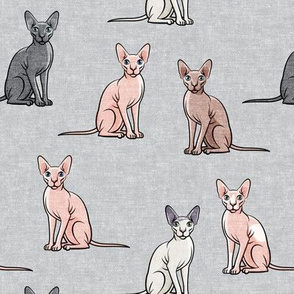 Sphynx Cats - Hairless Cats Sitting -  Multi grey  - LAD19