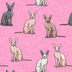 Sphynx Cats - Hairless Cats Sitting -  Multi Pink - LAD19