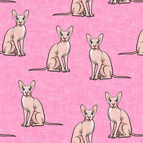 Sphynx Cats - Hairless Cats Sitting -  Pink - LAD19