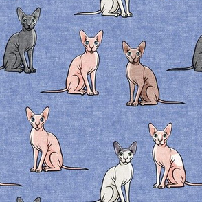 Sphynx Cats - Hairless Cats Sitting -  Multi Peri - LAD19