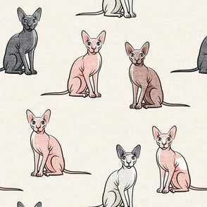Sphynx Cats - Hairless Cats Sitting -  Multi Cream - LAD19