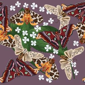 Moth Frenzy 05