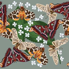 Moth Frenzy 06