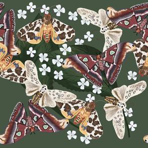 Moth Frenzy 07