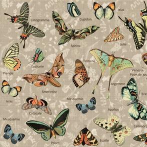 Pollinators n Latin names