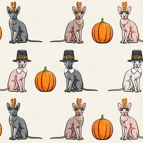 Thanksgiving  Sphynx Cat w/ pumpkin - Cream- LAD19