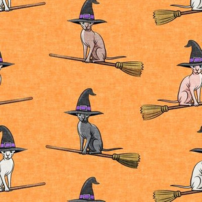 Witch Hats - halloween sphynx -  Sphynx Cats  - Orange  - LAD19