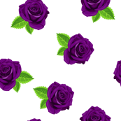 Jewel purple single rose on white