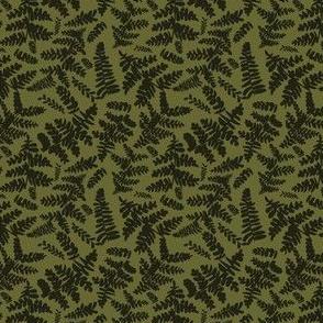 ferns shadows