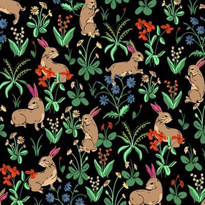 Bunny Rabbits Nocturnal