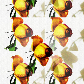 Yellow Rose 001