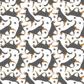 Trotting tailed Entlebucher mountain dog and paw prints - white