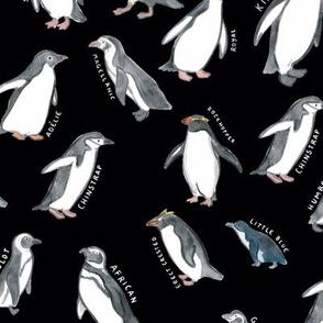 Large Scale World Penguins on Black
