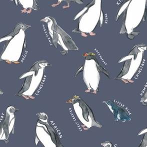Large Scale World Penguins on Dusty Blue