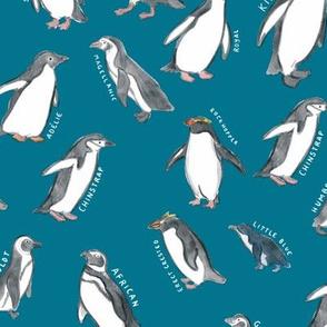 Large Scale World Penguins on Blue
