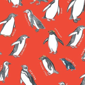 Large Scale World Penguins on Red