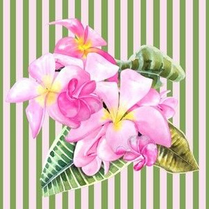 Frangipani (Plumeria) Pink Green Stripes