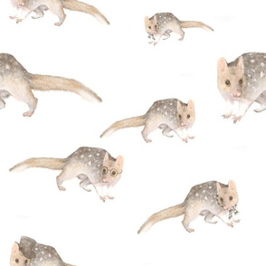 Quoll About Town