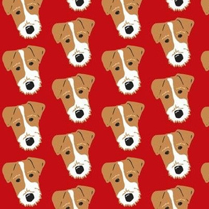 Wire Fox Terrier - Jack Russell Terrier - tan and red