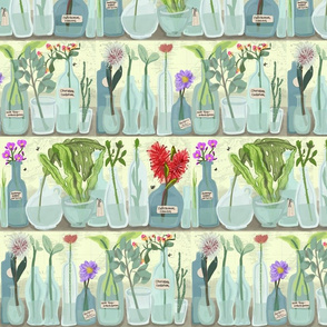 Australian Flora shelf collection