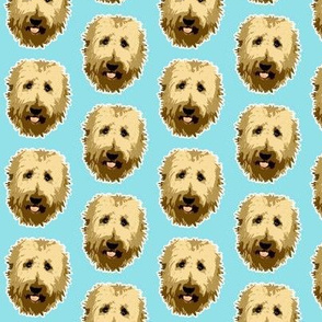 Goldendoodle dog face on Turquoise