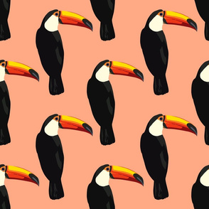 Talulah the toucan in coral