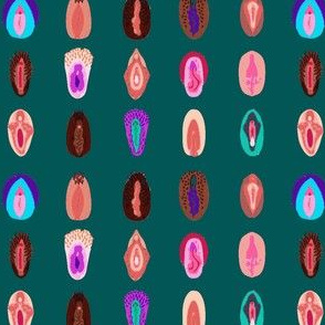 variety of vulvas- teal