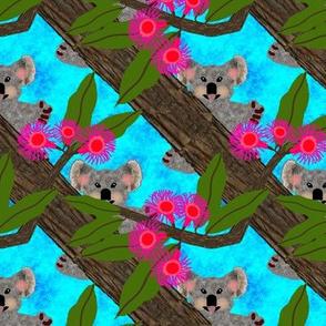 Koala3FloralAustrailia