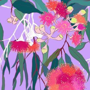 Australian Gumnut Eucalyptus Floral in Lilac Orchid