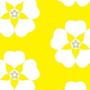 cestlavivid_lemon_blossom