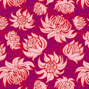 Telopea flowers