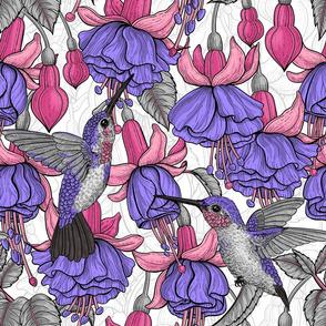 Fuchsia and hummingbirds