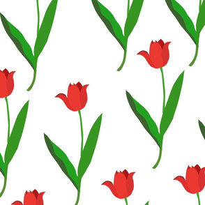 red tulips on whte