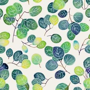 Australian eucalyptus (watercolor)