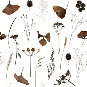 Dried Flowers // White