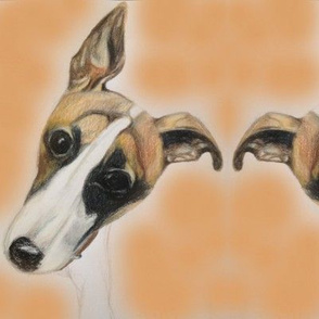 Whimsy whippet pup