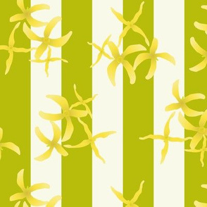 Forsythia on stripes