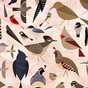 Sonoran Birds