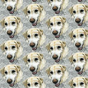Beloved labrador spread