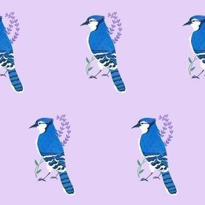 Lavender Blue Jay