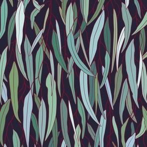 Evergreen Eucalyptus Forest