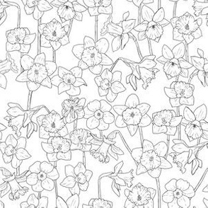 Small Black and White Daffodil Illustration