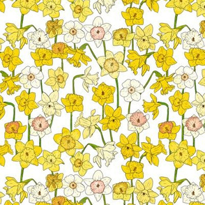 Small Daffodil Illustration on White