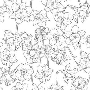 Medium Black and White Daffodil Illustration