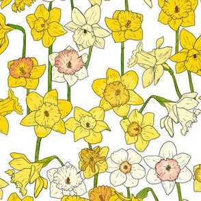Medium Daffodil Illustration on White