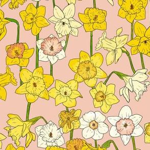Medium Daffodil Illustration on Pink